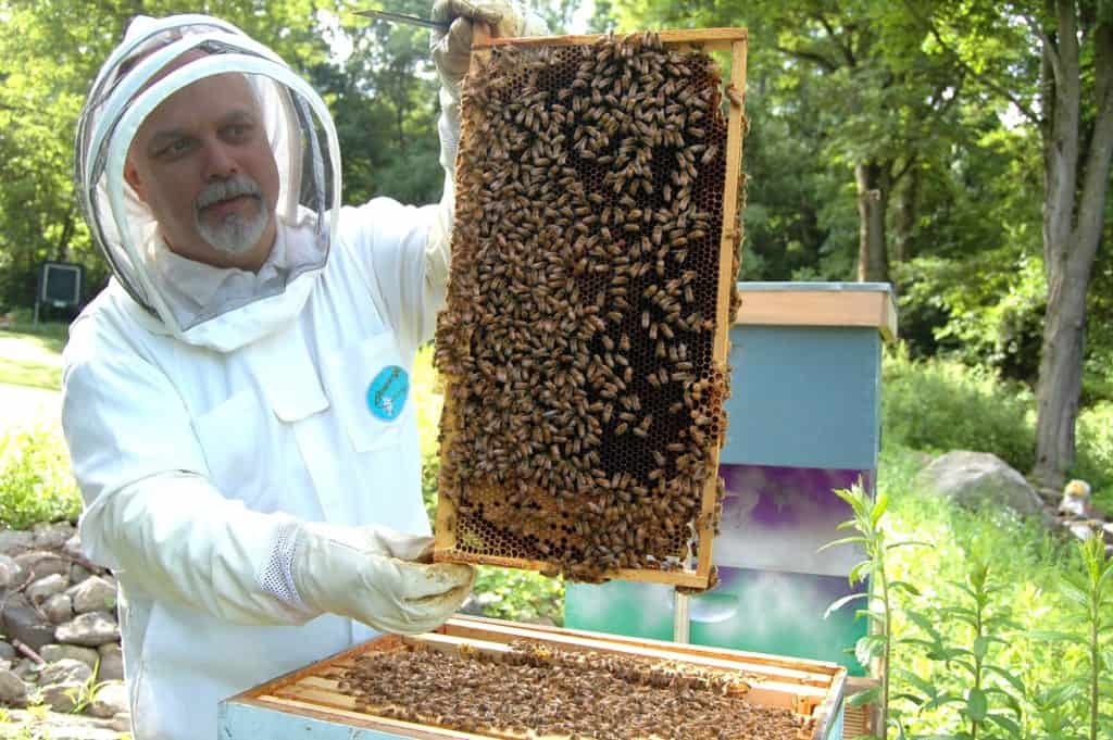 beekeeper harvesting beeswax honey