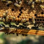 beeswax sustainable beehive