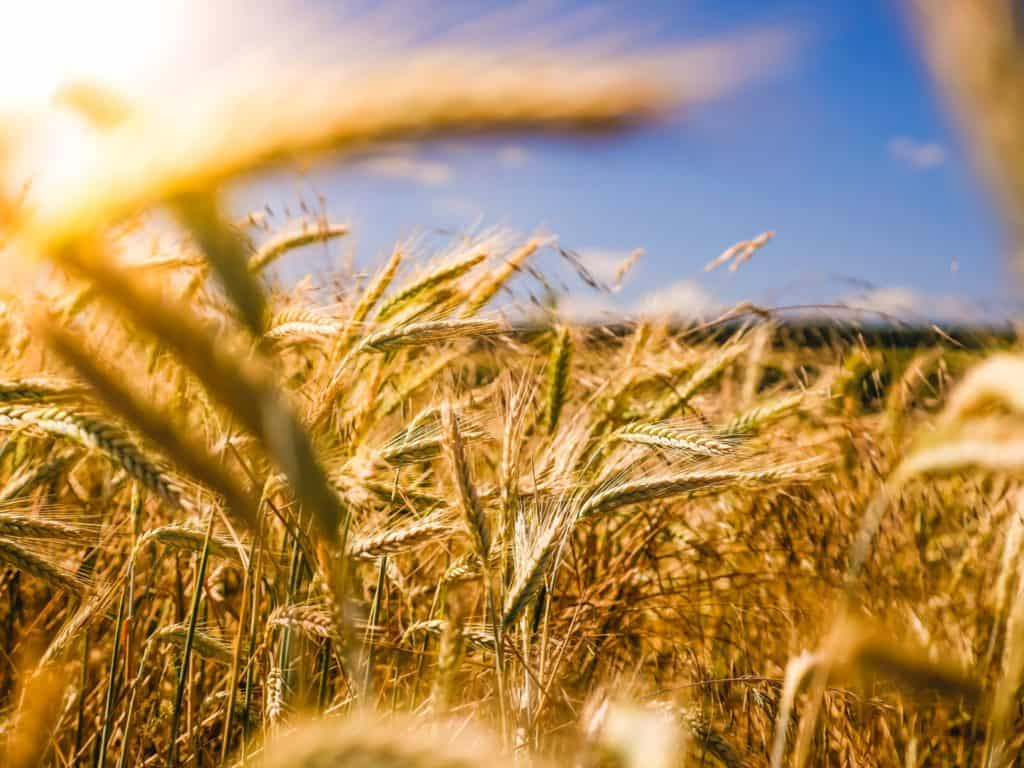 sustainable agriculture crops