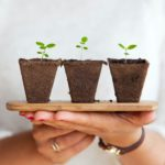 Is Indoor Gardening Cost Effective