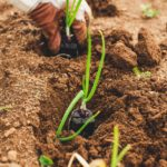 Is Gardening Considered Agriculture