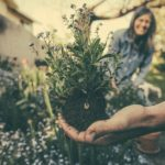Is Landscaping Horticulture
