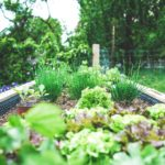 Is Landscaping Good for Plants