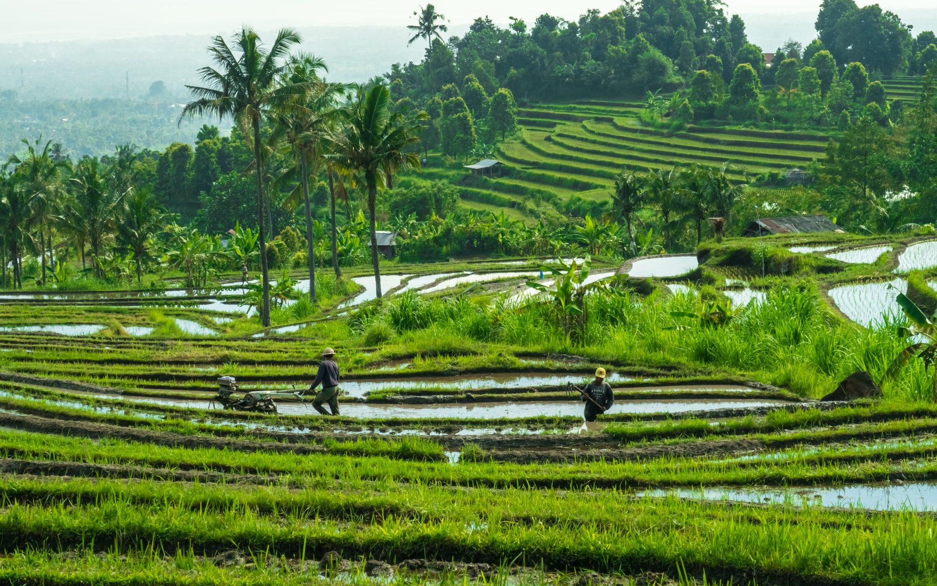 Is Rice Sustainable