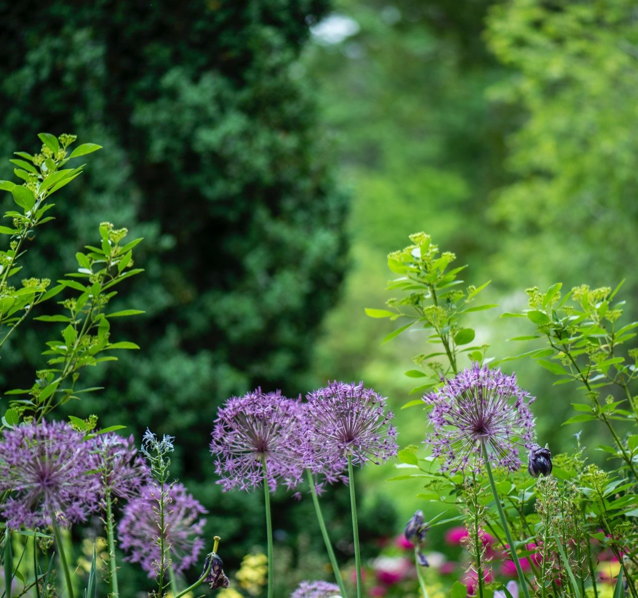 What Is Native Gardening