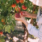 What Is Orchard Gardening