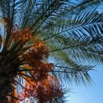 Is Palm Wax Sustainable
